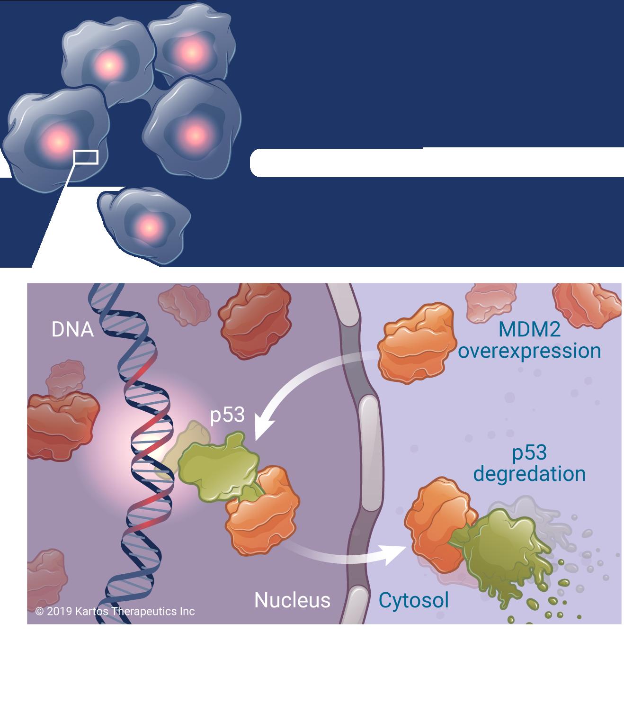 Snipe Science MDM2 Cancer Kartos Thera 3x